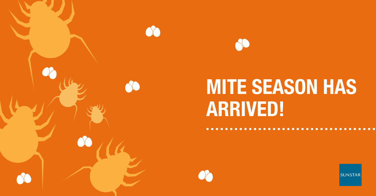 Did you know? Mite allergen correlates closely with allergic diseases.