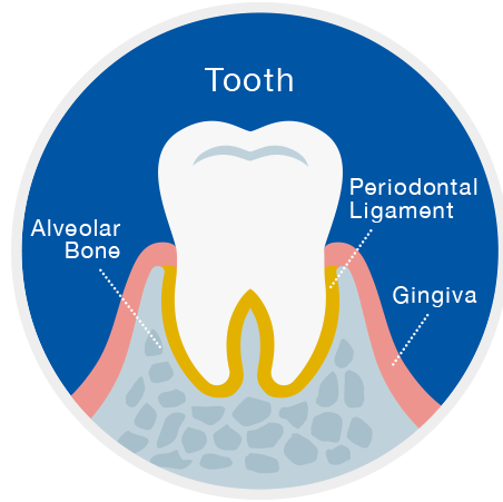 Holistic care to help keep teeth for life — GUIDOR | Research